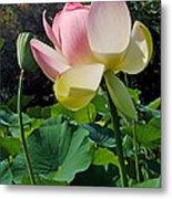 Lotus Lily Standing Tall Metal Print