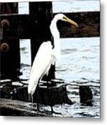 Louisiana Egret Metal Print