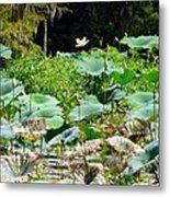 Louisiana Lily Pads Metal Print
