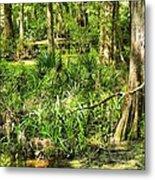 Louisiana Wetland Metal Print
