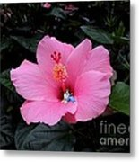 Lounging In A Hibiscus Metal Print by Renee Trenholm