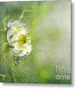 Love In A Mist Floral Metal Print
