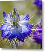 Love In The Mist - Nigella Metal Print