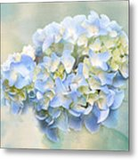 Love Letter Vii Hydrangea Metal Print by Jai Johnson