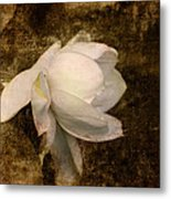 Love Letter Viii Cape Jasmine Gardenia Metal Print by Jai Johnson