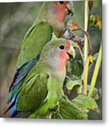 Lovebird Couple  Metal Print