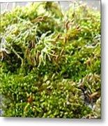 Lovely Green Lichen Metal Print