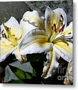 Lovely Sunlit Lily Metal Print
