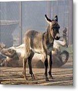Loving Family Of Donkeys Metal Print by Odon Czintos