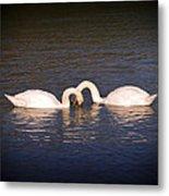 Loving Swans Metal Print