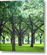 Low Trees In Flushing Meadows-corona Park Metal Print