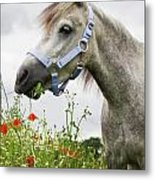 Lulu In The Poppy Field Metal Print