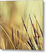 Luminis -s02b - Yellow Metal Print