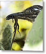 Lunch With A Roadrunner  Metal Print