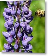 Lupine And Bee Metal Print