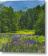 Lupine In Sugar Hill New Hampshire Metal Print