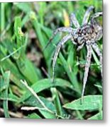 Lurking Spider In The Grass Metal Print