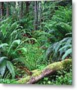 Lush Rain Forest In Olympic National Park Metal Print