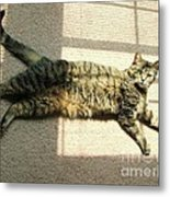 Lying In The Sunlight Metal Print