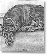 Lying Low - Doberman Pinscher Dog Art Print Metal Print by Kelli Swan