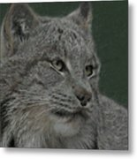 Lynx Painterly Metal Print