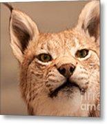 Lynx Portrait Metal Print