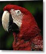 Macaw In Red Metal Print