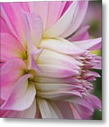 Macro Flower Profile Metal Print