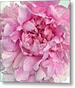 Macro Peony Abstract Metal Print
