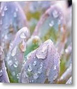 Macro Succulent With Droplets Metal Print