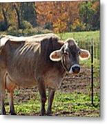 Mad Cow Tail Swish Metal Print