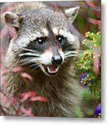 Mad Raccoon Metal Print