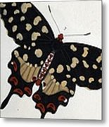 Madagascan Pipevine Swallowtail Butterfly Metal Print