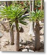 Madagascar Palms Metal Print