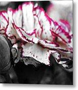 Magenta Carnation Metal Print