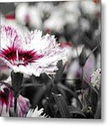 Magenta Flower Metal Print