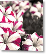 Magenta Flowers Metal Print