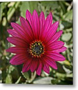 Magenta In Your Face Metal Print