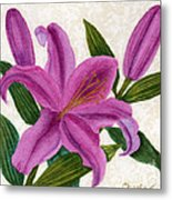 Magenta Lily Metal Print by Vikki Wicks