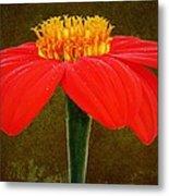 Magenta Zinnia Flower Metal Print