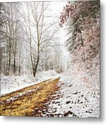 Magic Trail Metal Print by Debra and Dave Vanderlaan