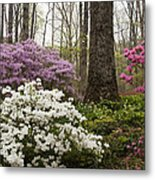 Magical Azaleas At Callaway Botanical Gardens Metal Print