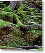 Magical Roots At Sabbath Day Metal Print