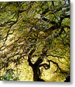 Magical Tree Metal Print
