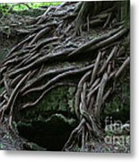 Magical Tree Roots Metal Print by Chris Hill