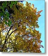 Magnificent Maples Metal Print