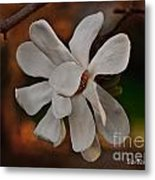 Magnolia Bloom Metal Print