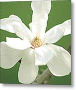 Magnolia Blossom I Metal Print