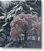 Magnolia Blossoms And Conifers Metal Print