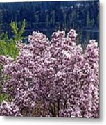 Magnolia By The Lake Metal Print